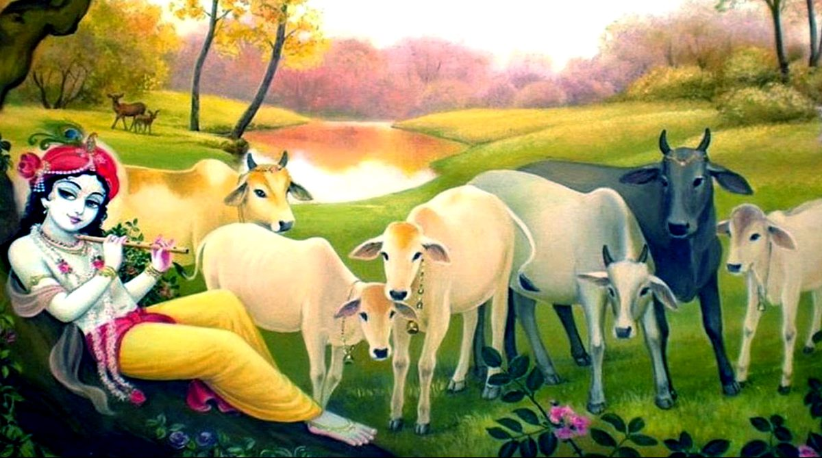 Cows India Painting Stock Photos and Images  alamycom